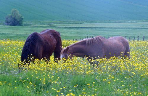 Oris et Remus sont les premiers poneys lachés de cette saison