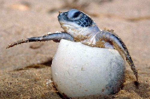 Cherche nom pour tortue