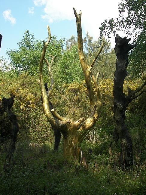 L'arbre d'or de la Forêt de Paimpont.