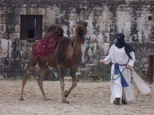 Un spectacle sur mesures pour les Bédouins.