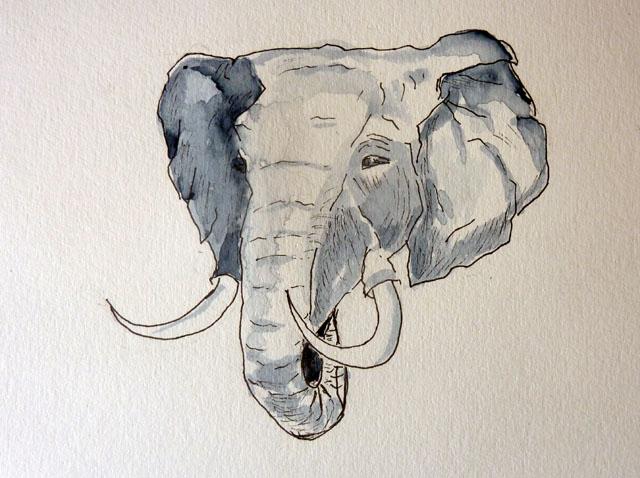 E - Elephant.JPG