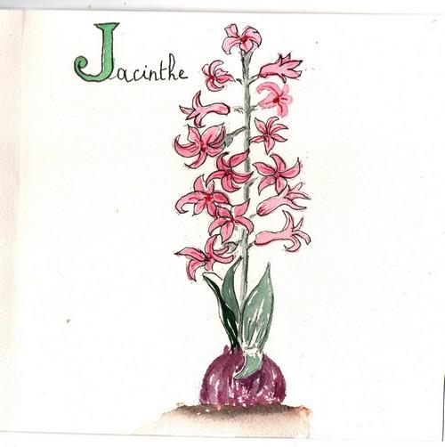 J - Jacinthe.jpg