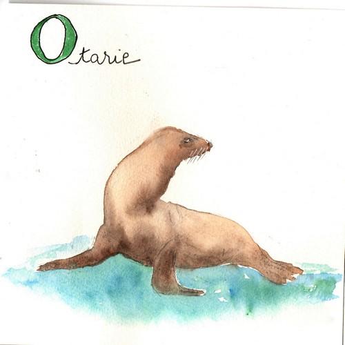 O - Otarie.jpg
