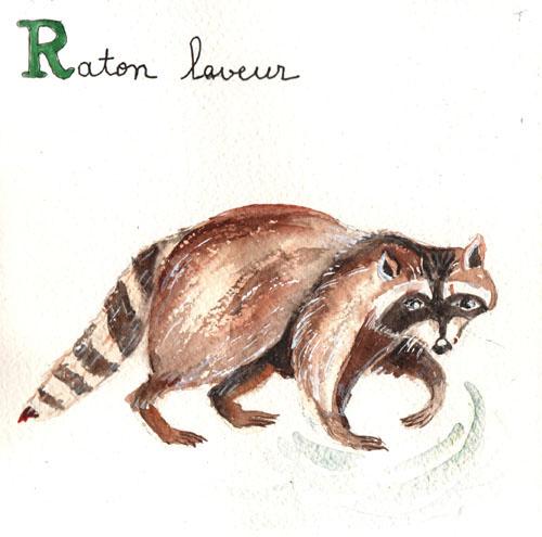 R - Raton laveur.jpg