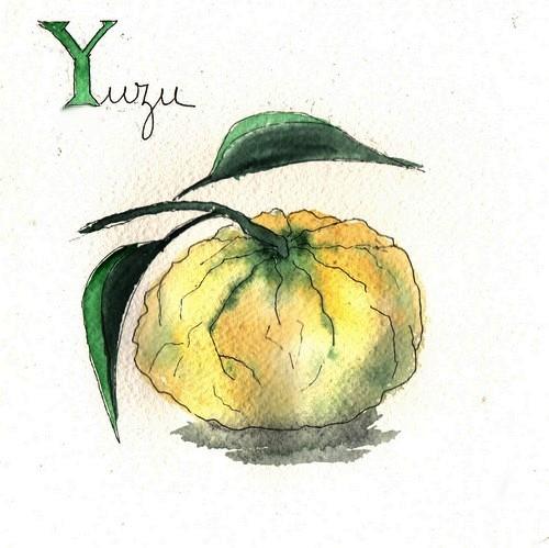 Y - Yuzu.jpg