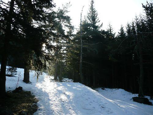 Pas trop de bruit dans la forêt = vous verrez sûrement biches et cerfs gambader...