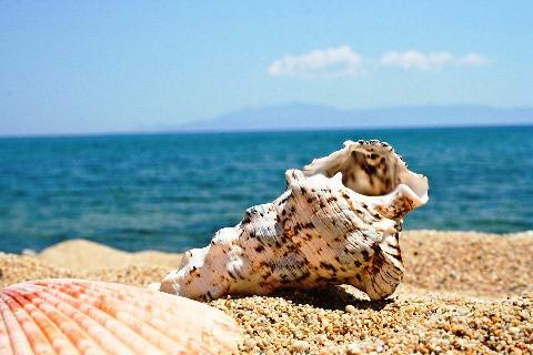 beach-2321649_960_720.jpg