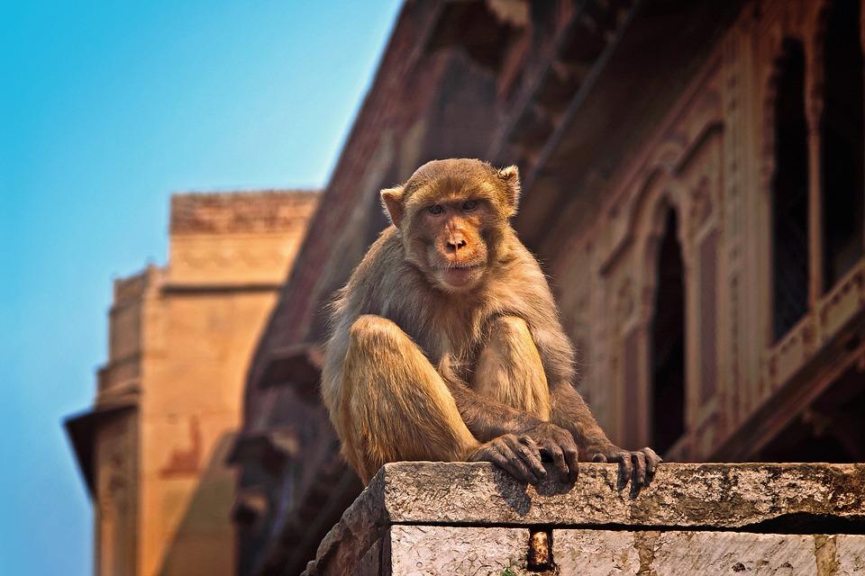monkey-1103141_960_720.jpg