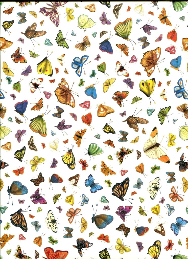 papillon exotique.jpg