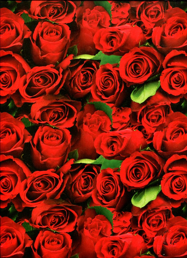 roses rouges.jpg