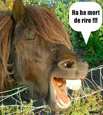 poney.jpg