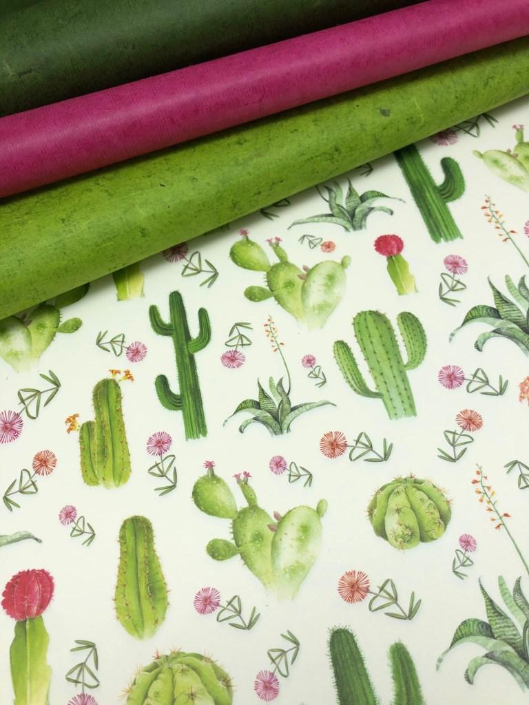 assortiment cactus.jpg
