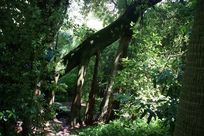 jardin botanique (18).JPG