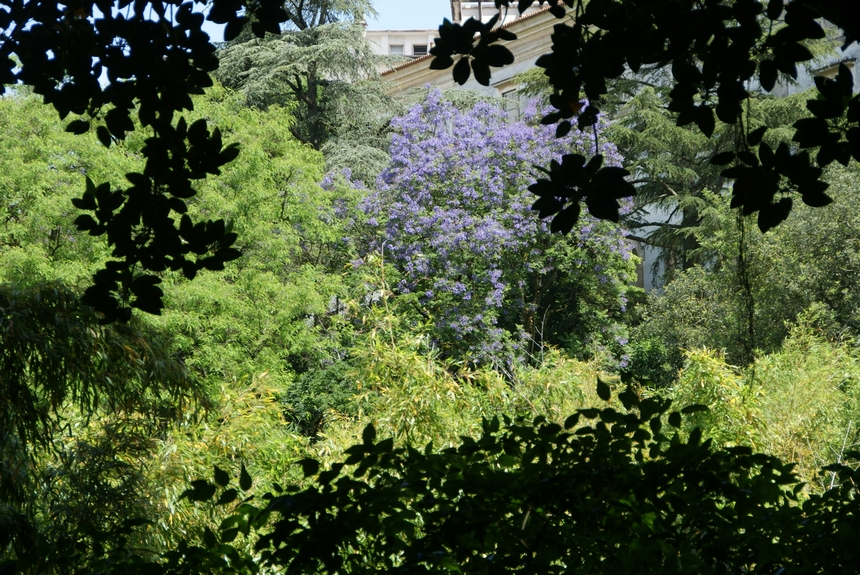 jardin botanique (19).JPG