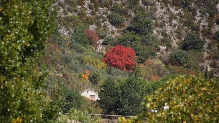 automne (2).JPG