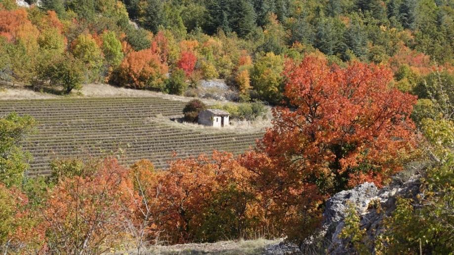 automne (4).JPG