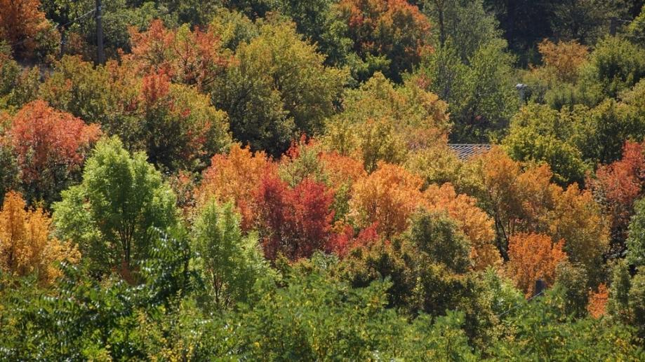 automne (3).JPG