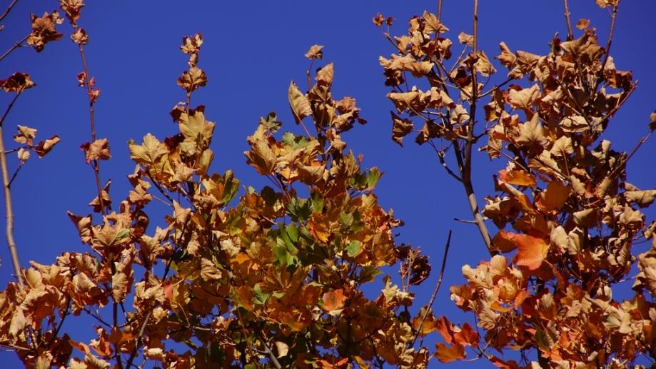 automne (8).JPG