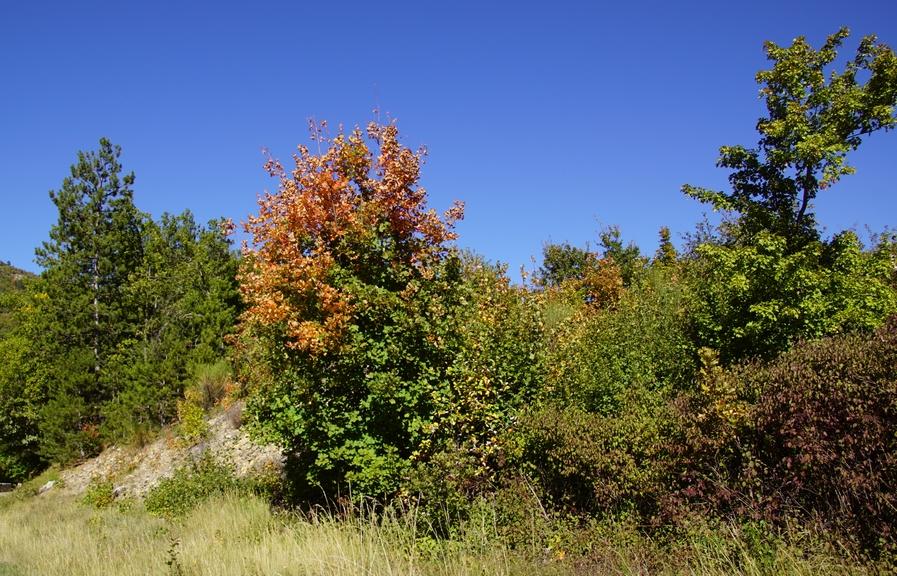 automne (7).JPG