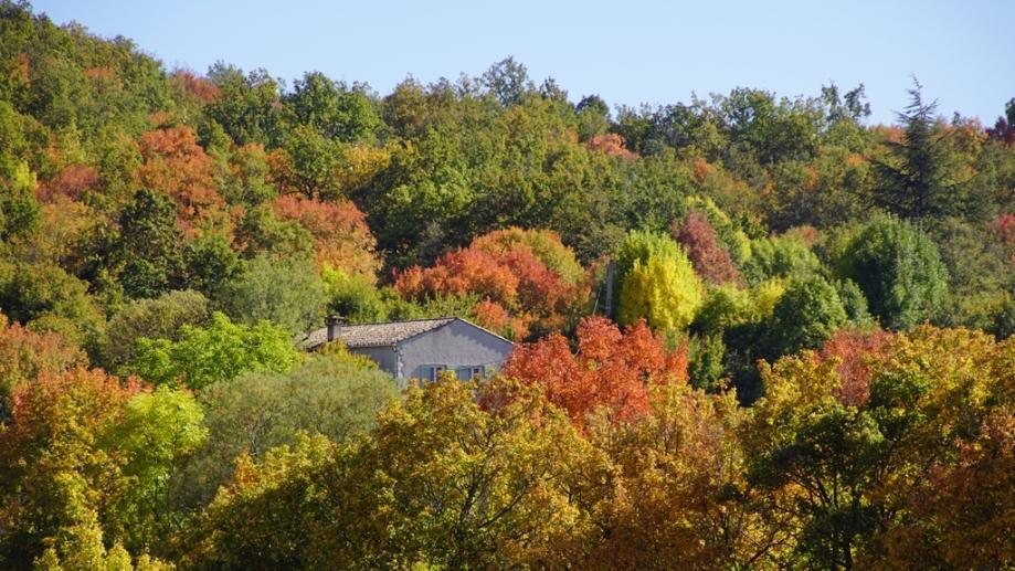 automne (14).JPG