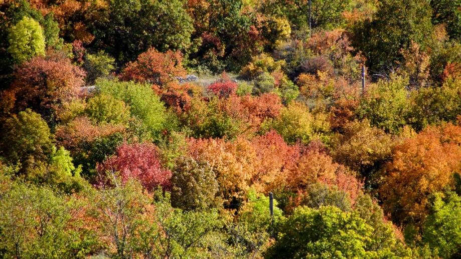 automne (15).JPG
