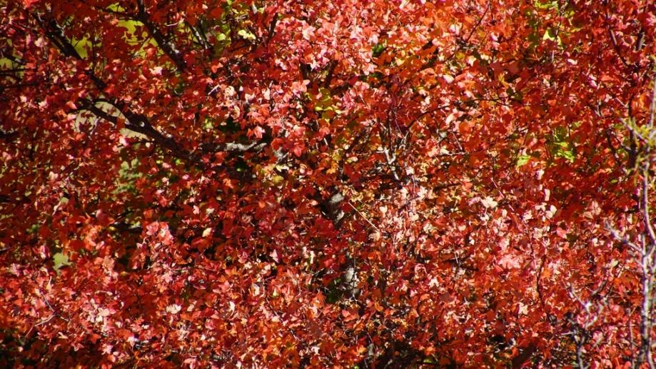 automne (17).JPG