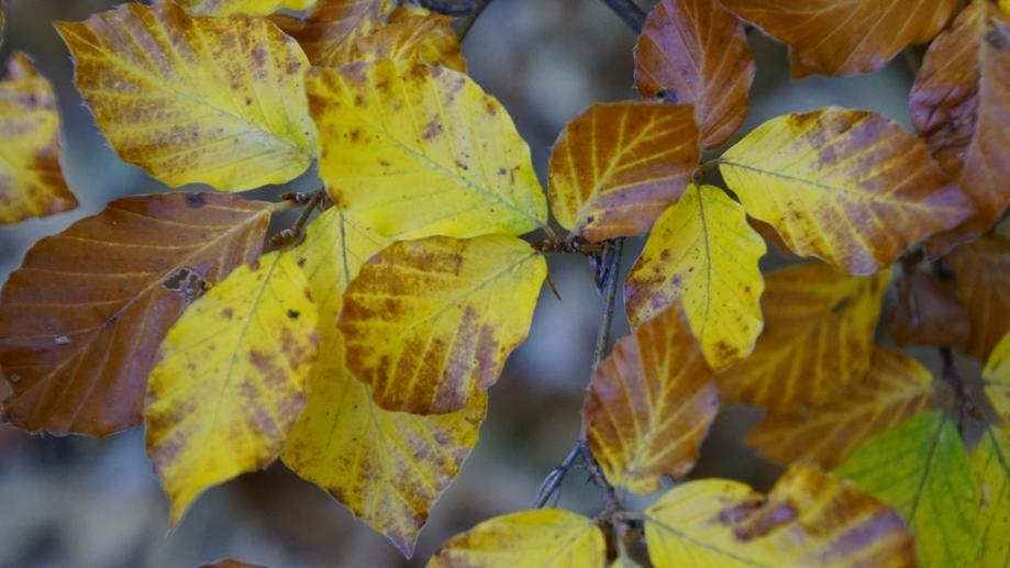 automne (24).JPG