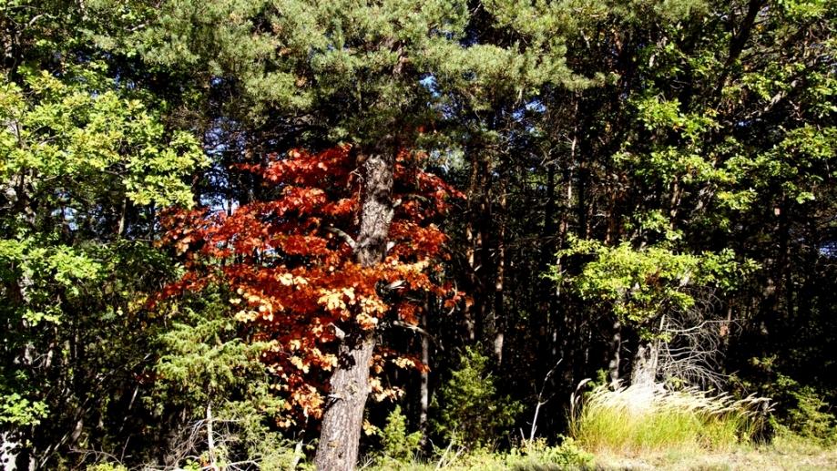 automne (19).JPG