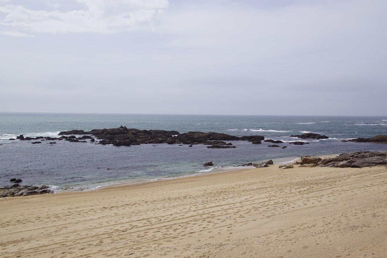 Vila chà (1).JPG