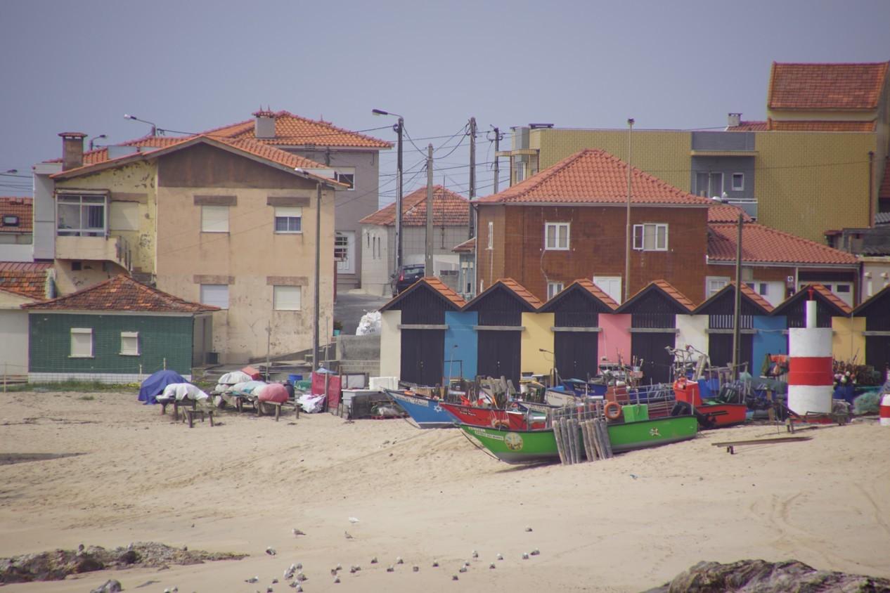 Vila chà (2).JPG