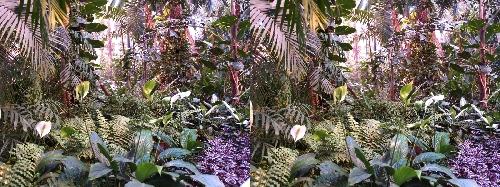 Incroyable jungle dans la gare d'Atocha à Madrid