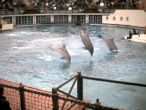 Admirez les dauphins !