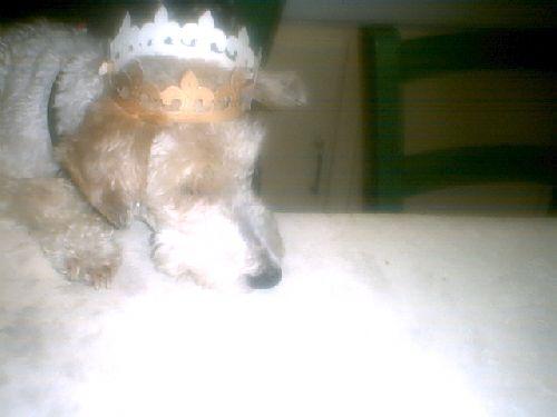 Je suis la reine, mais je m\'ennuie...