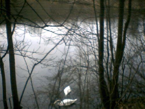 Marche autour des étangs de Commelles (Oise) (10 janvier 2008) (2)