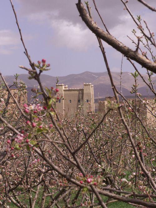 Avril à Oussikis en fleurs