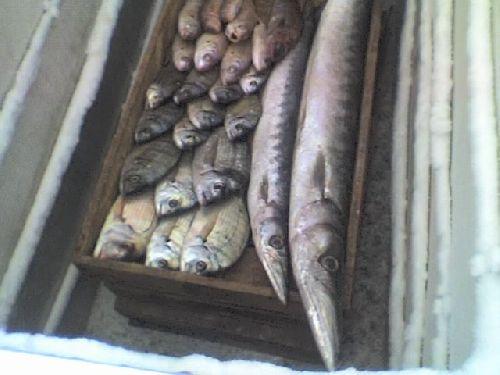poissons de pointe rouge