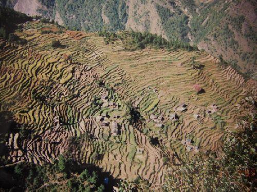 ce ne sont pas les riziéres de Bali mais çà \