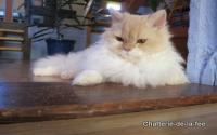 Chatterie-de-la-Fée