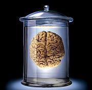 cerveau en boite.jpg