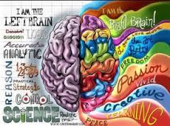 Cerveau gauche-droit.jpg