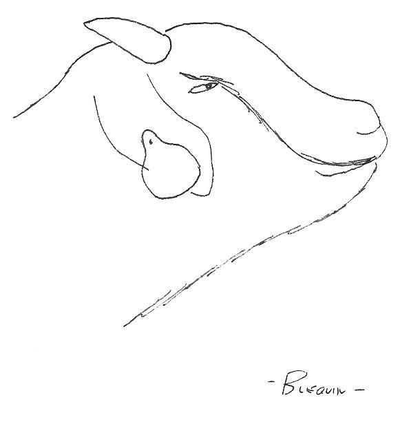 03-20-Traon Bihan (2).jpg