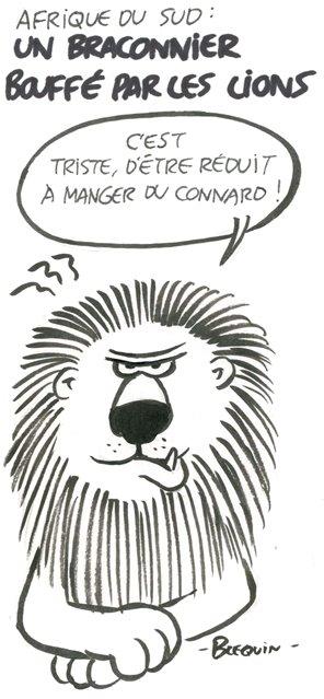 02-14-Braconniers-Afrique du Sud-Lion.jpg