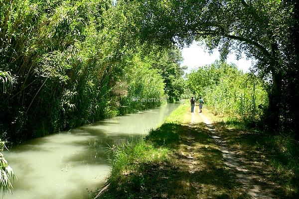 canal_de_carpentras_2016 (13).JPG