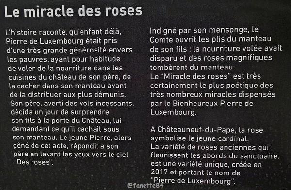 miracle_roses.jpg