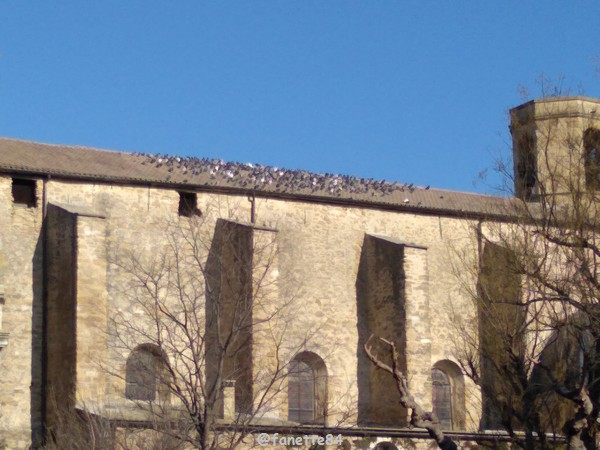 bedarrides_eglise_pigeons (2).jpg