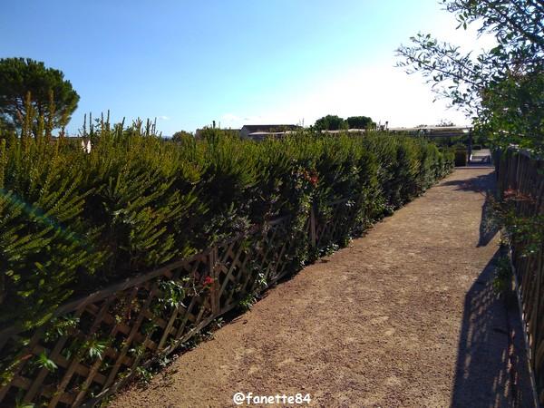 caumont_jardin_romain (69).jpg