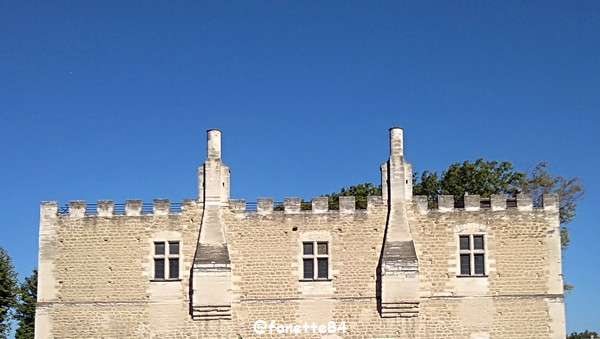 chateau fargues 5.jpg