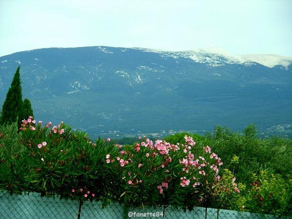 Vu du Mont Ventoux à Mormoiron