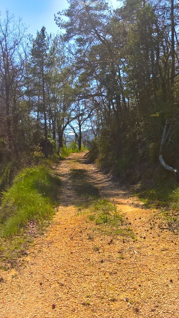 Chemin au Crestet