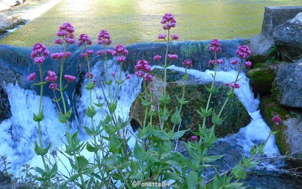Fleurs à Fontaine de Vaucluse